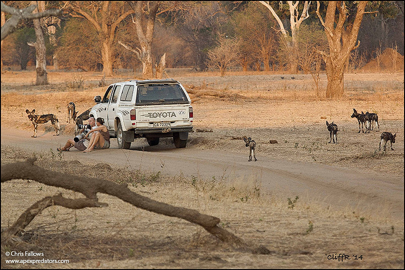 Chris and Monique with the wild dogs of Mana Pools National Park in Zimbabwe.