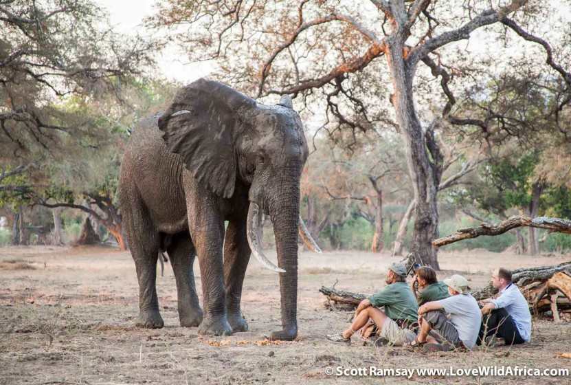 Stretch Ferreira and elephant in Mana Pools National Park in Zimbabwe