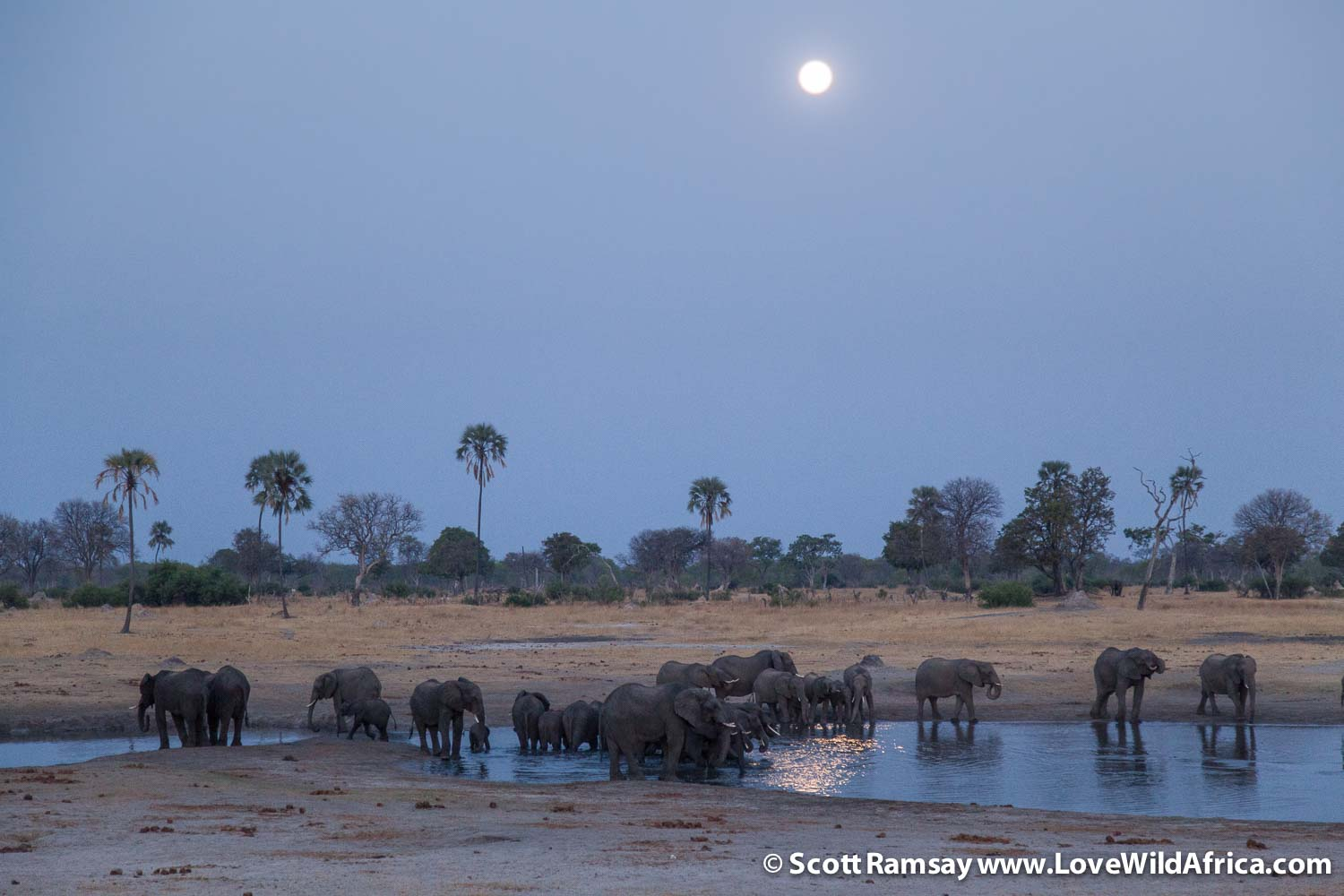 Watching the full moon rise over Hwange, as elephant herds drink from the pan...must rate as one of the finest experiences in Africa?