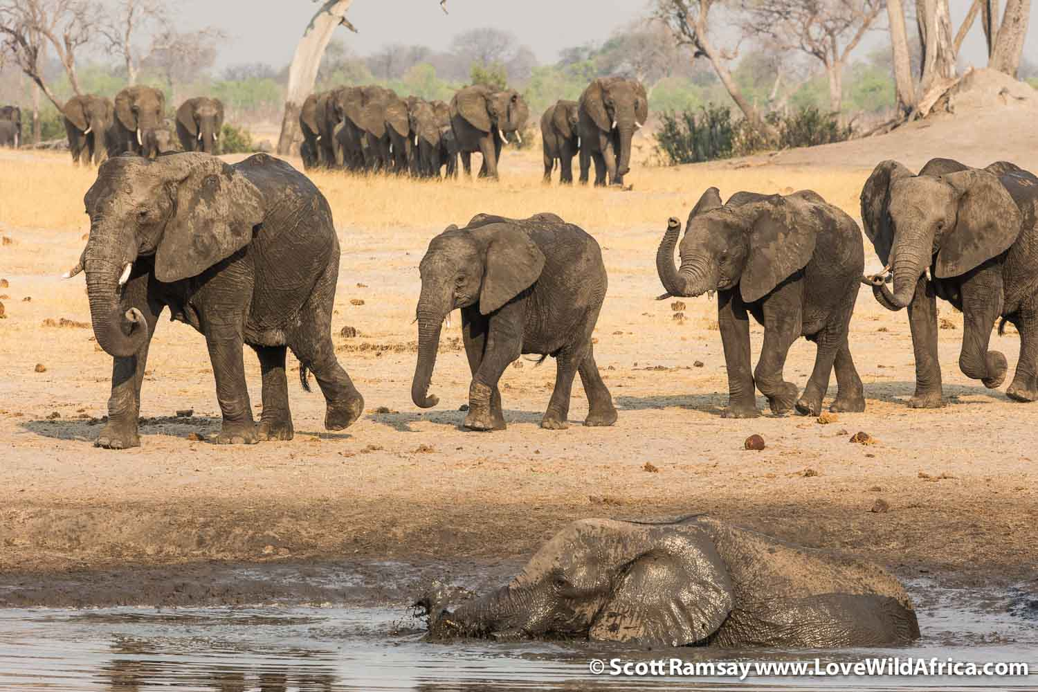 Hwange is the best place in Africa to see elephants...after Chobe National Park. You can see why!
