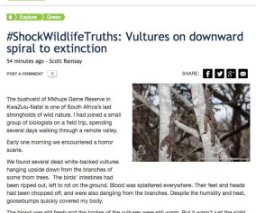 Vultures - Scott Ramsay - News24